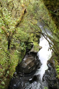 A cool walk with a stunning waterfall on the way to Milford Sound